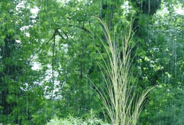 Singin´ in the rain