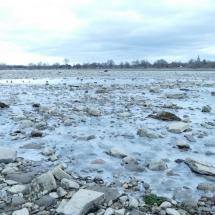 Blick auf die Beueler Seite bei Niedrigwasser