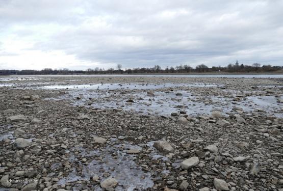 Der Rhein mit Niedrigwasser