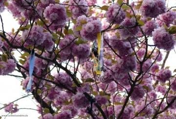 KW 14 // Die Woche in Bonn – Schlüssel schließen Kirschblüten auf