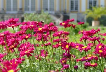 Spaziergang im Botanischen Garten