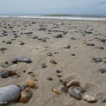 Steinchen sammeln am Strand