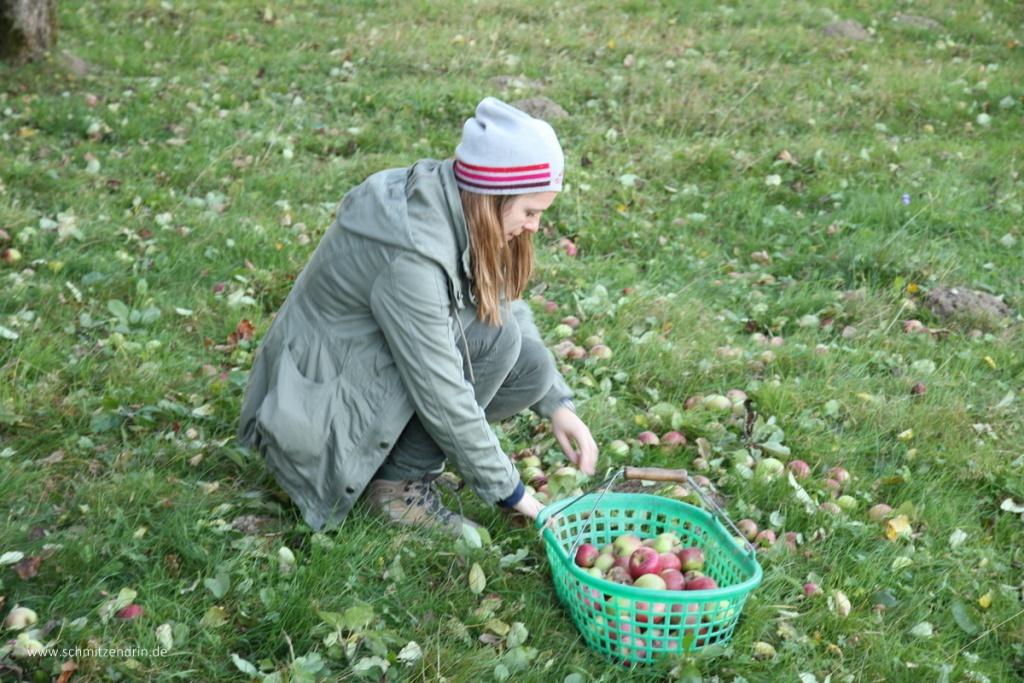 Frau Schmitz bei der Apfelernte