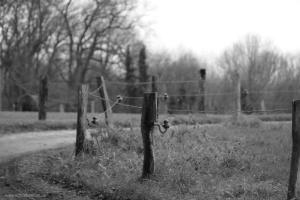 Schwarz-Weiß-Aufnahmen beim Dezember-Spaziergang