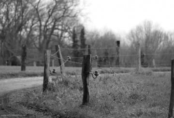sw-Aufnahmen beim Dezember-Spaziergang
